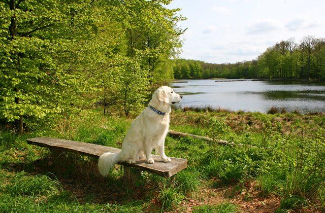 A dog sitting on a bench