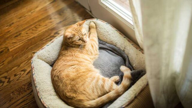 A cat sleeping on small bed near the window